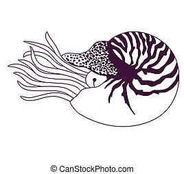 Nautilus Pompilius illustration