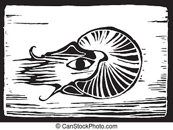 Nautilus - retro woodcut image of the many chambered...