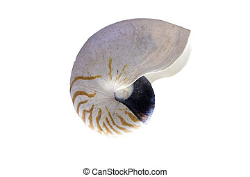 nautilus, shell., aislado, pompilius