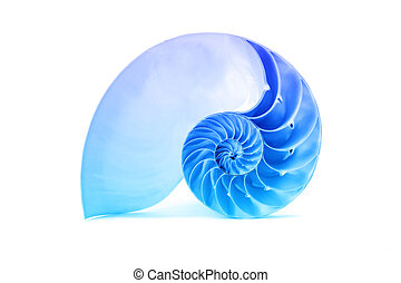 Nautilus shell and famous fibonacci blue geometric pattern