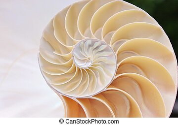nautilus shell cross-section