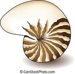 Nautilus Shell - Nautilus shell isolated on a white...