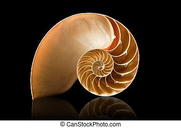 A perfect and amazing fibonacci pattern in a nautilus shell