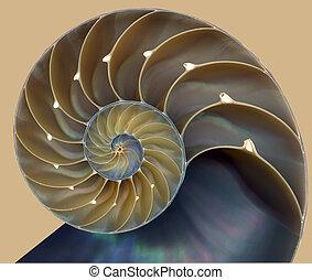 Nautilus shell pattern