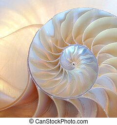 nautilus shell symmetry Fibonacci half cross section spiral...