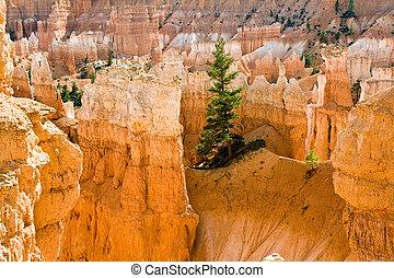 Navajo Loop Trail - Wall Street: Bryce Canyon National Park