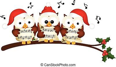navidad, búhos, coro, canto