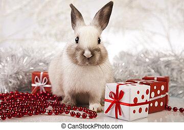 navidad, conejo, conejito