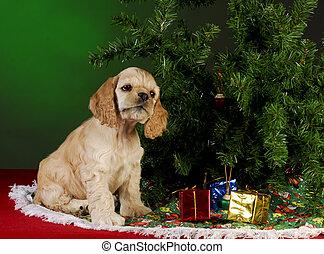 navidad, perrito