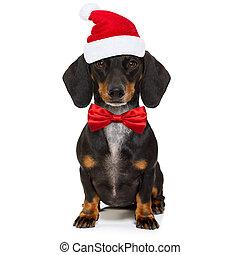 navidad, perro, santa claus