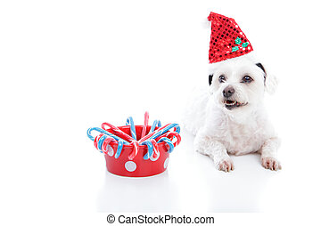 navidad, perro, y, tazón