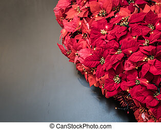 navidad, planta, exhibiciones, flor de nochebuena, leaves.
