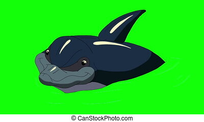 Navy Blue Dolphin in the Water. Animated footage, animal on...