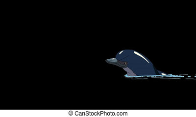 Navy Blue Dolphin Swims in the Water. Animated footage with...