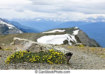 nazionale, alpino, parco, prato, diaspro