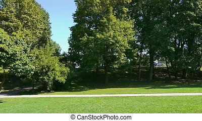 neat green park in summer - trees in a park in summer