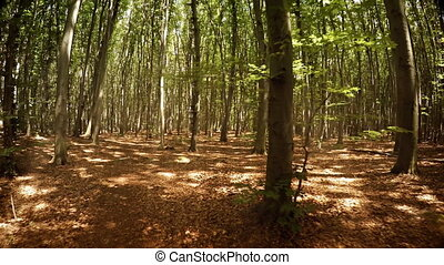 Neat Rows of Planted Trees in a Managed Forest. Video 1080p...