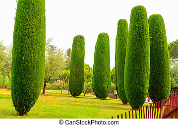 Neatly trimmed tree - Neatly trimmed hedge tree and grass in...