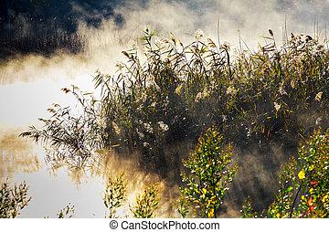 nebbia, con, luce sole, a, gelido, mattina, su, il, fiume