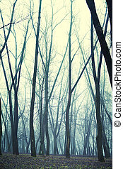 nebbia, foresta