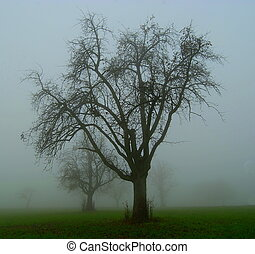 nebbia, mela, albero