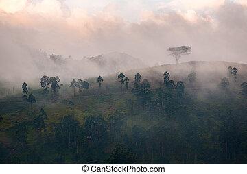 nebbia, montagne