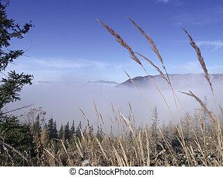 nebbia, sopra, montagne