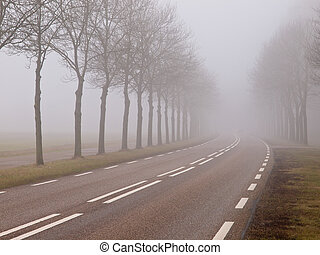 nebbia, strada, mattina