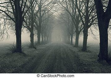nebbia, viale