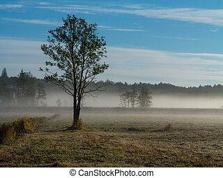 nebbioso, albero, alder, mattina