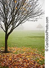 nebbioso, autunno, foresta, nebbioso, alba, paesaggio