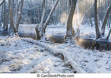 nebbioso, fiume, inverno, foresta