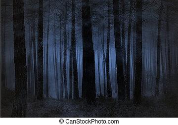 nebbioso, foresta