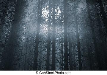 nebbioso, foresta, in, uno, luna piena, notte