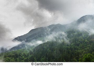 nebbioso, foresta, montagna
