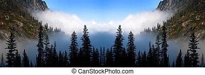 nebbioso, foschia, regione selvaggia, albero, pino, nebbioso, valle, foresta