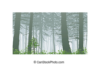 nebbioso, inspirando, maxwell, monte, scena, foresta...
