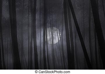 nebbioso, pieno, foresta, night., luna