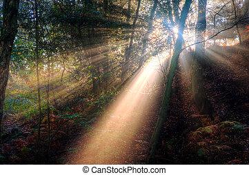 nebbioso, raggi sole, autunno, attraverso, foresta, nebbioso...