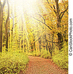 nebbioso, strada, in, foresta