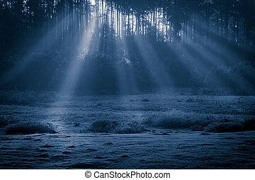 nebbioso, vecchio, nebbioso, foresta, a, chiaro di luna