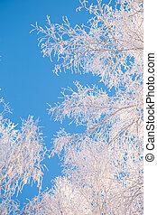 nebe, les, strom, kopyto, grafické pozadí, větvit, jíní, zamrzlý, sníh skrýt, neposkvrněný