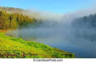 nebel, aus, der, fluß, in, hayden, tal, von, yellowstone nationalpark, in, sommer