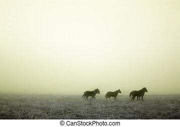 nebel, gallping