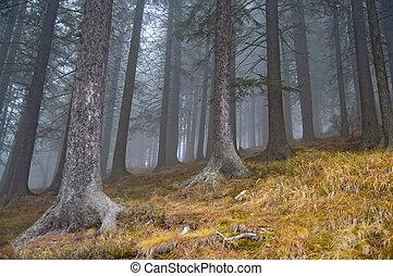 nebel, in, forrest