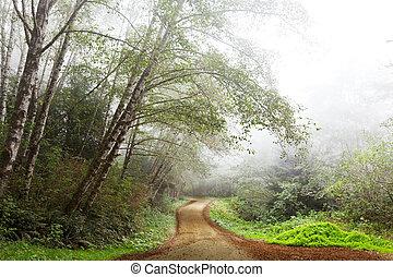 nebel, in, wald