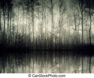 nebel - An image of a beautiful forest with fog in bavaria...
