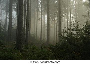 nebel, wald, 14
