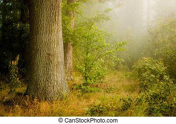 nebel, wald