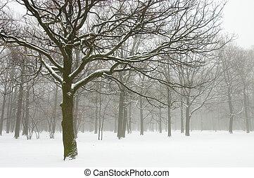 nebelhafte bäume, winterlandschaft
